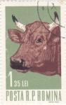 Stamps Romania -  Vaca