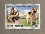 Sellos de Europa - Rumania -  Exposición mundial canina,Brno, Pastor Alemán