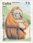 Stamps Cuba -  Animales del Zoológico- pongo pygmaeus