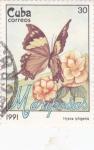 Stamps Cuba -  Mariposas- Hypna iphigenia