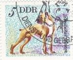 Stamps Germany -  Perros de raza- Boxer