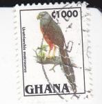 Sellos de Africa - Ghana -  Urotriorchis macrourus