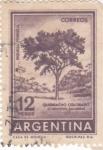 Sellos de America - Argentina -  Riqueza Forestal- Quebracho Colorado