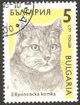 Stamps Bulgaria -  3287 - Gato Europeo