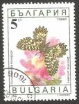 Sellos de Europa - Bulgaria -  3324 - mariposa zeynthia polyxena