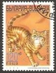 Sellos de Europa - Bulgaria -  3774 - Gato exótico