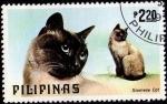 Stamps Philippines -  Siamese Cat