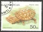 Sellos de Asia - Azerbaiyán -  Tortuga