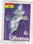 Sellos de Africa - Ghana -  Rufous-Crowned roller
