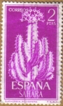 sellos de Europa - España -  SAHARA - CACTUS