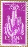 Stamps Spain -  SAHARA - CACTUS