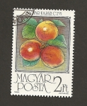 Stamps Hungary -  Albaricoques