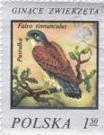 Stamps Poland -  AVE- ALCÓN