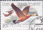 Sellos de Europa - Rusia -  5643 - Pato tadorna ferruginea