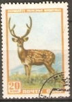 Stamps Russia -  CIERVO