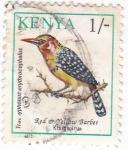 Sellos de Africa - Kenya -  Barbet Kisigajiru