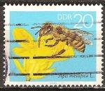 Sellos de Europa - Alemania -  La abeja de la miel.Apis mellifera L. en una flor de la violación-DDR.