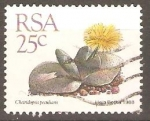 Stamps South Africa -  CHEIRIDOPSIS  PERCULIARIS