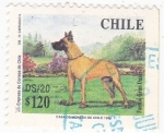 Stamps Chile -  GRAN DANÉS