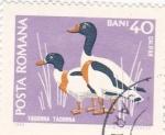 Stamps Romania -  Aves-Tadorna