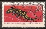 Sellos de Europa - Alemania -  Animales Protegidos-Salamandra (Salamandra salamandra)DDR.
