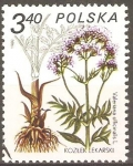 Stamps Poland -  VALERIANA  OFFICINALIS