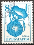 Sellos del Mundo : Europa : Bulgaria : Flores - Ipomoea tricolor GAV.