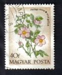 Stamps Hungary -  Flores