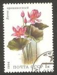 Sellos de Europa - Rusia -  5095 - flora