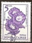 Sellos del Mundo : Europa : Bulgaria : Convolvulus tricolor L.(La correhuela de tres colores).