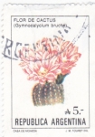 Sellos de America - Argentina -  Flor de Cactus