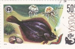 Stamps Poland -  PLATICHTHYS FLESUS- PZW