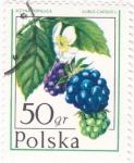 Stamps Poland -  FRUTAS SALVAJES- MORAS
