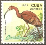 Stamps Cuba -  EUDOCIMUS  RUBER