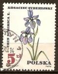 Sellos de Europa - Polonia -  Iris sibirica