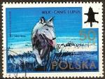 Sellos de Europa - Polonia -  Congreso Internacional de Caza y el Consejo de 50 Aniv de la Asociación Polaca de Caza (Lobo).