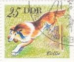 Stamps Germany -  COLLIE