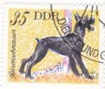 Stamps Germany -  SCHAUZER