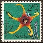 Stamps Oceania - Pitcairn -  Plantas suculentas