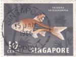 Stamps : Asia : Singapore :  RASBORA KETEROMORPHA