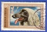 Stamps : Europe : Hungary :  Perro afgano