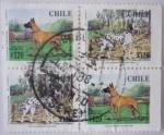Sellos del Mundo : America : Chile :  Perros