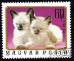 Stamps Hungary -  Felis Domestica