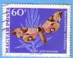 Stamps : Europe : Hungary :  Esti pávaszem