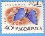 Stamps Hungary -  Lysandra Hylas (2)
