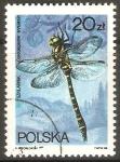Stamps Poland -  CORDULEGASTER  ANULATUS