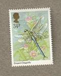 Stamps United Kingdom -  Libelula