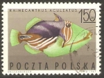 Stamps Poland -  PEZ  TIRADOR  RAYADO
