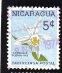 Sellos de America - Nicaragua -  Sobralia Pleiantha