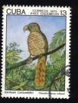 Sellos de America - Cuba -  Aves Endemicas
